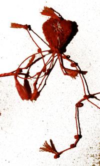 bandaged heart 17