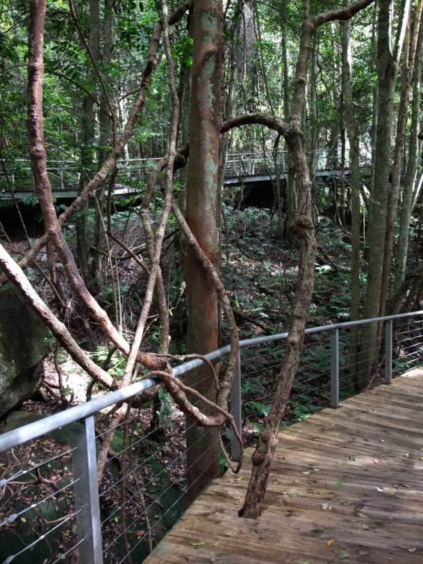 boardwalk in the Jurassic Valley Scenic World Katoomba