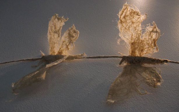 detail of moths in Traveling Light 2011 by Marguerite Derricourt