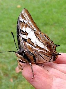 butterflydreaming1