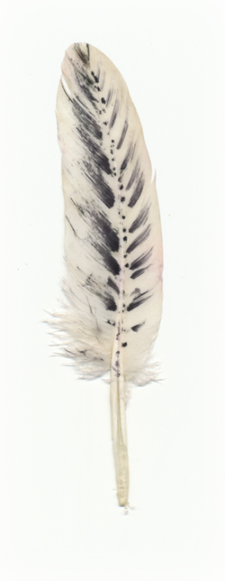 feather-from-Michelle