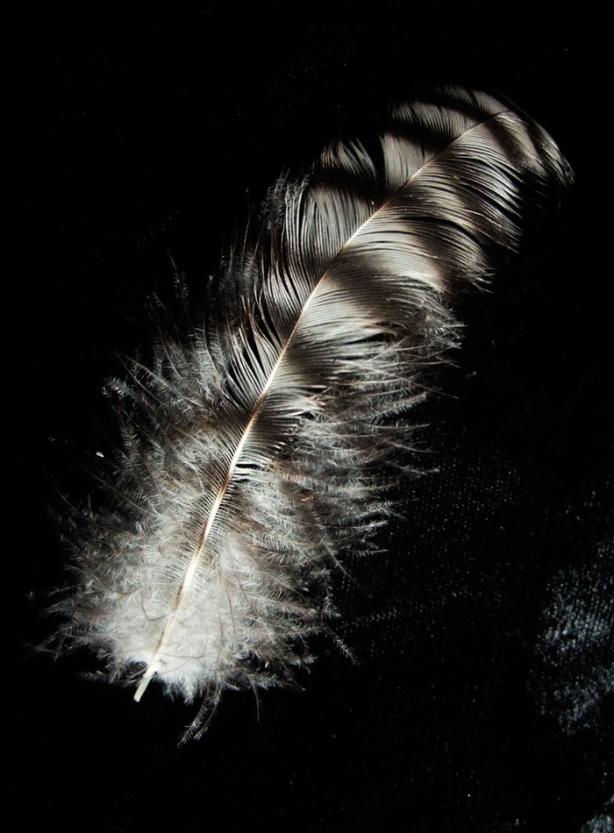 magic-feather