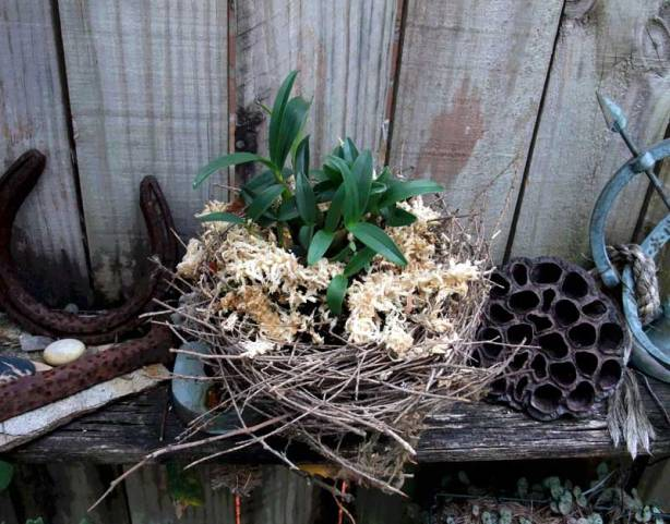 bush-orchid-nest-2