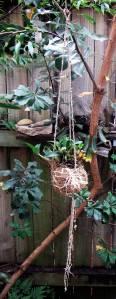bush-orchid-nest