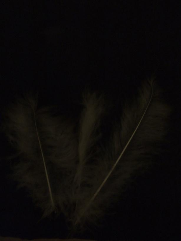 dark-feathers