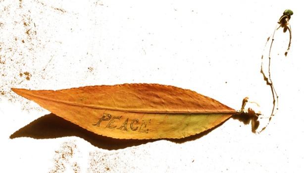 Peace-Leaf-2013-by-Mo