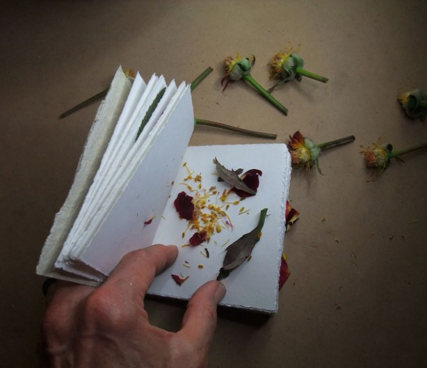filling-the-rosebook-with-petals