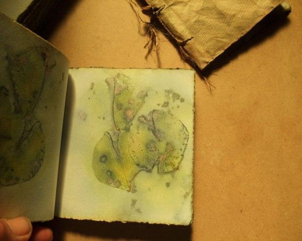 rose-book-no-2-inside