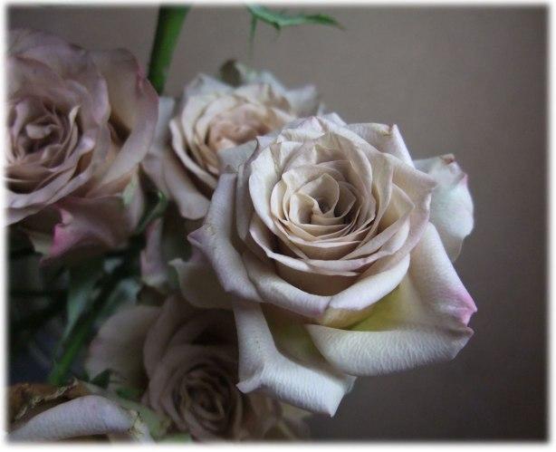 week-old-roses