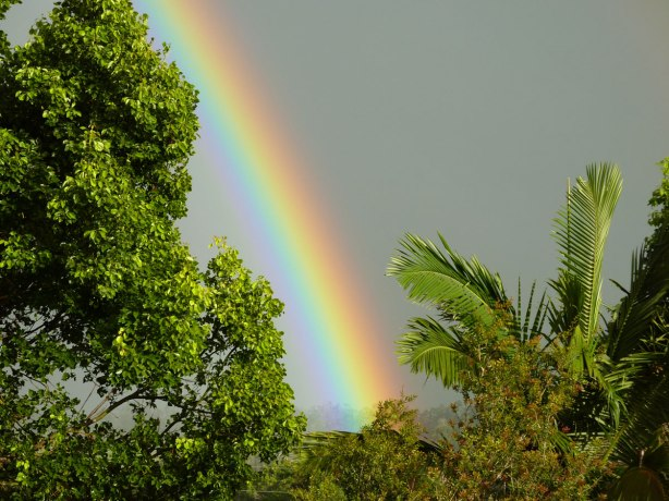rainbow-in-paradise