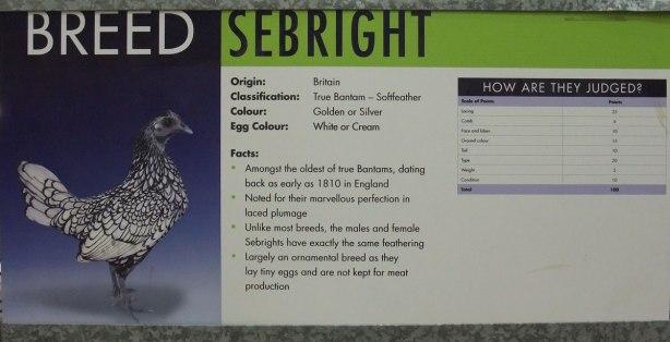 sebright-specs
