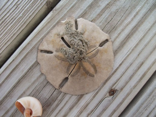 magic-sand-dollar