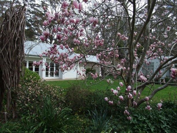 Sturt-Gallery-magnolia
