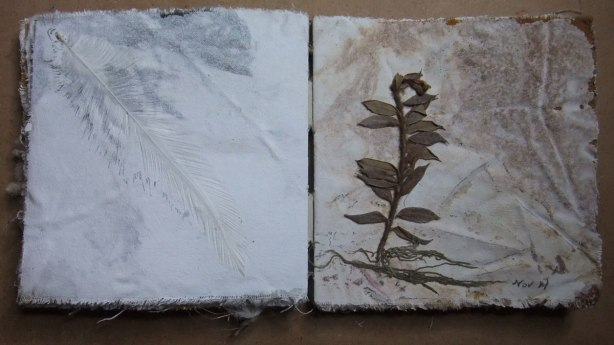 feather plant pressing
