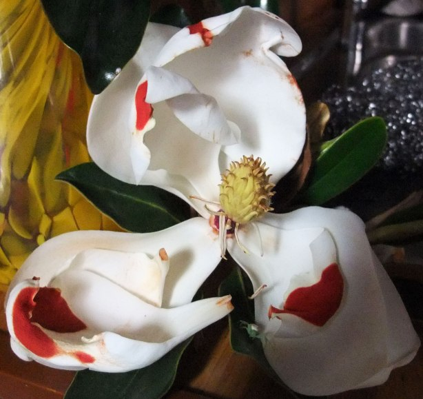 magnolia-painted-red-by-the-sun-2-Mo-14