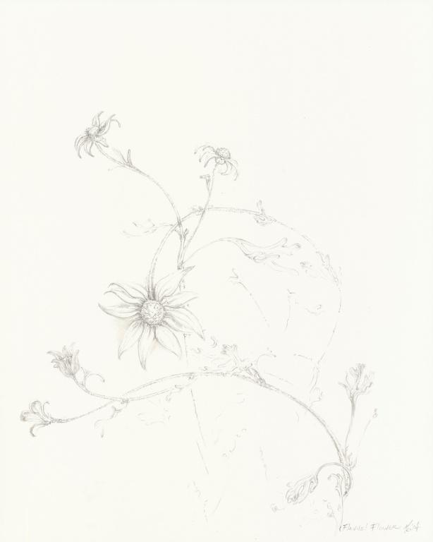 flannel-flower-on-clayboard- Mo 14