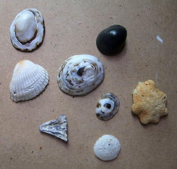 tiny-shells