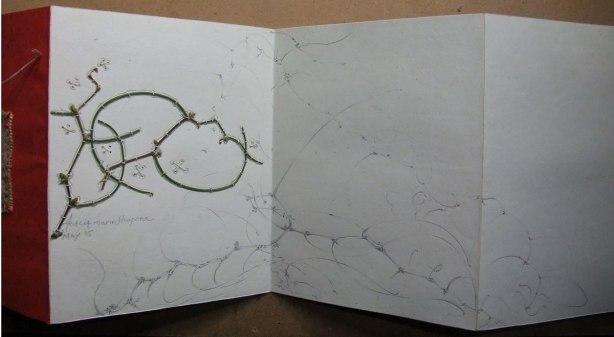 stitched Acacia merinthopera
