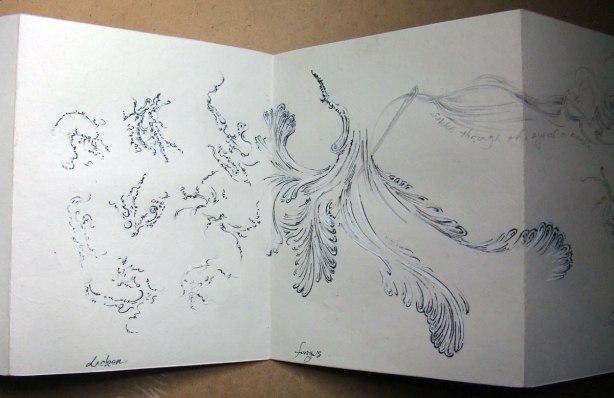 nature-studies