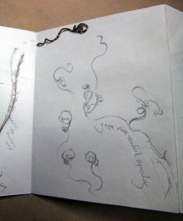 tendrils