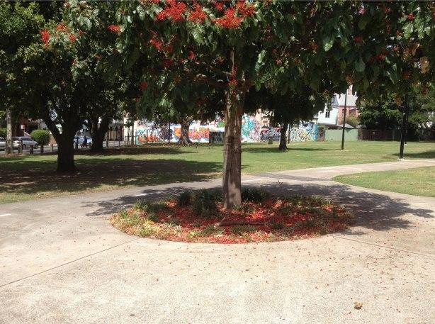 flame-tree-8