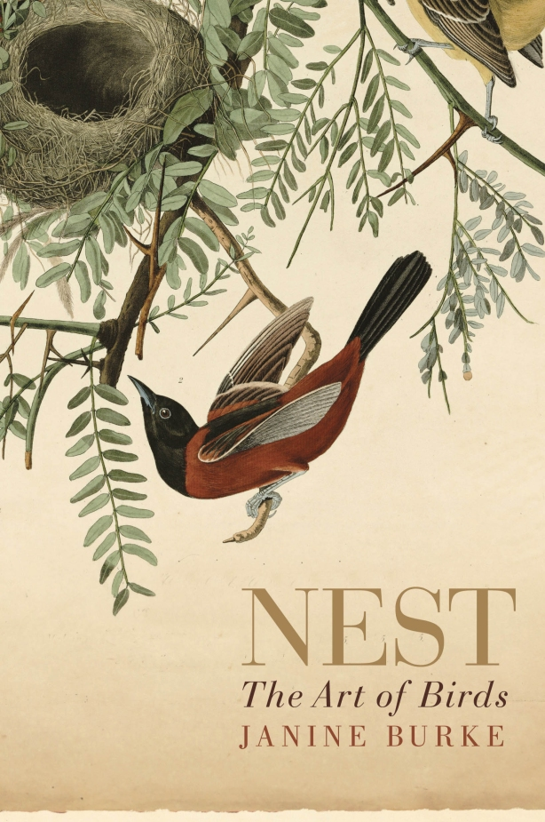 Nest the Art of Birds by Janine Burke
