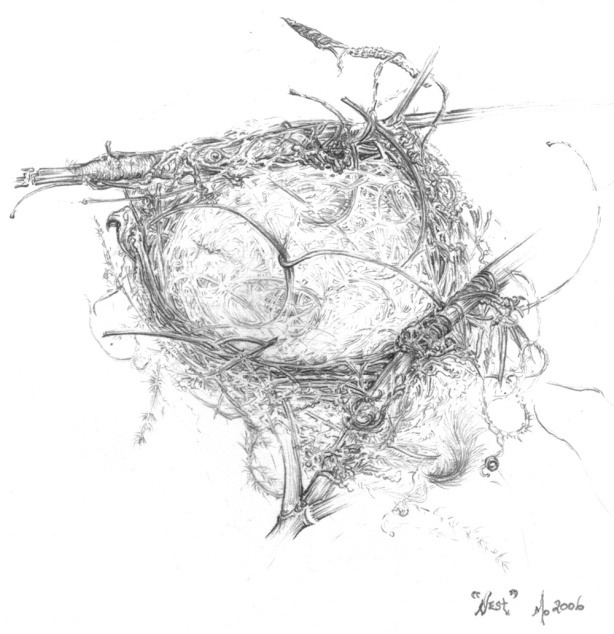 Superb-Blue-Wren-Nest-by-Mo-Orkiszewski-2006