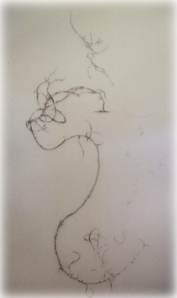 lichen-on-drafting-film-Mo16
