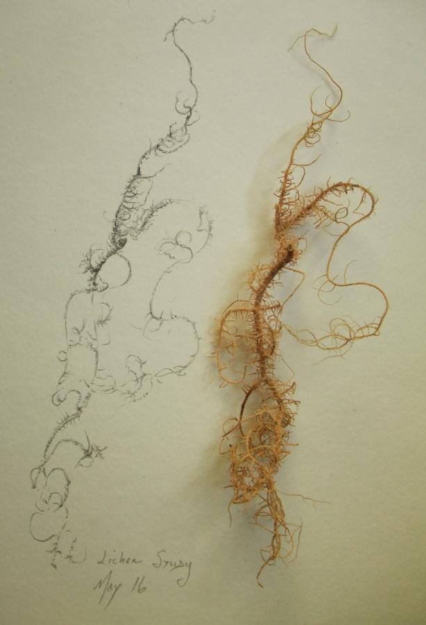 lichen-study-Mo16