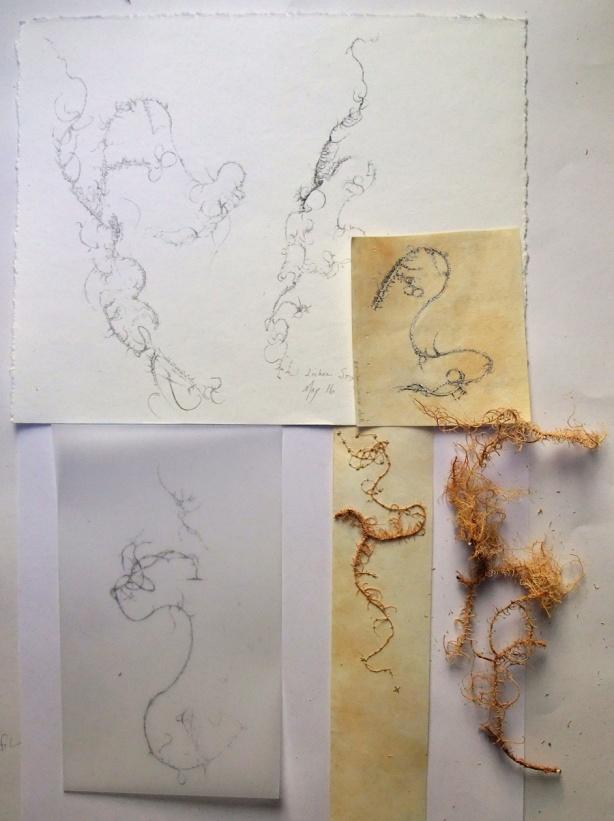 lichen-variations-Mo-16