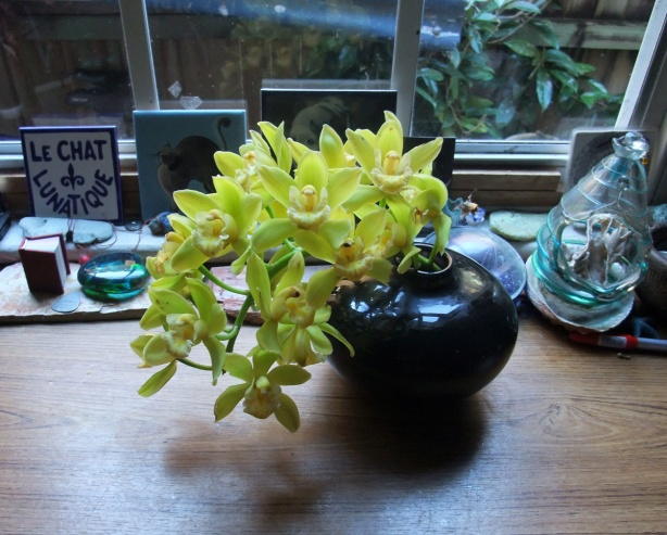 Cymbidium-orchid-Mo16