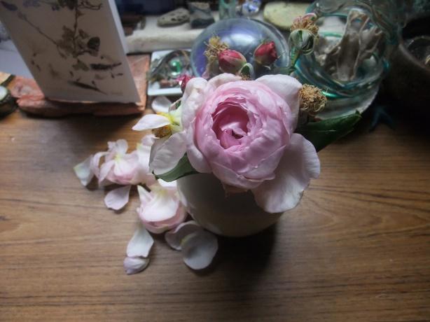 week-old-heritage-roses