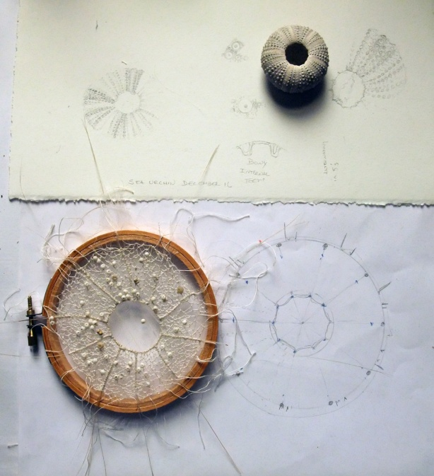 sea-urchin-in-process-mo16