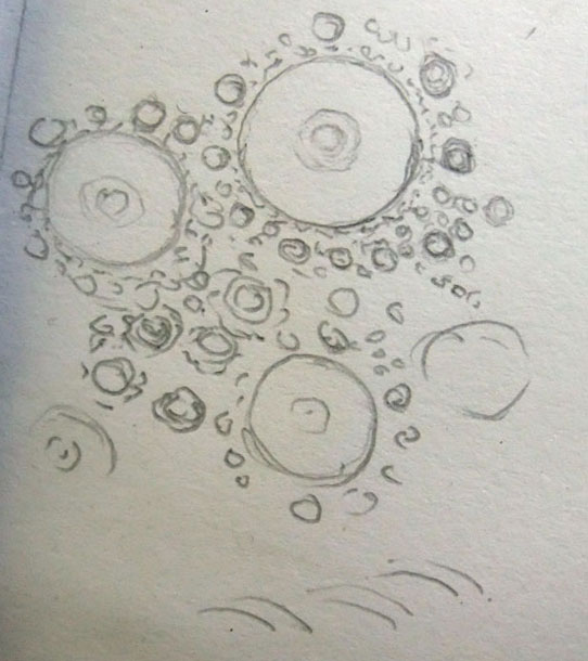 sea-urchin-III-drawing-detail-Mo17.jpg