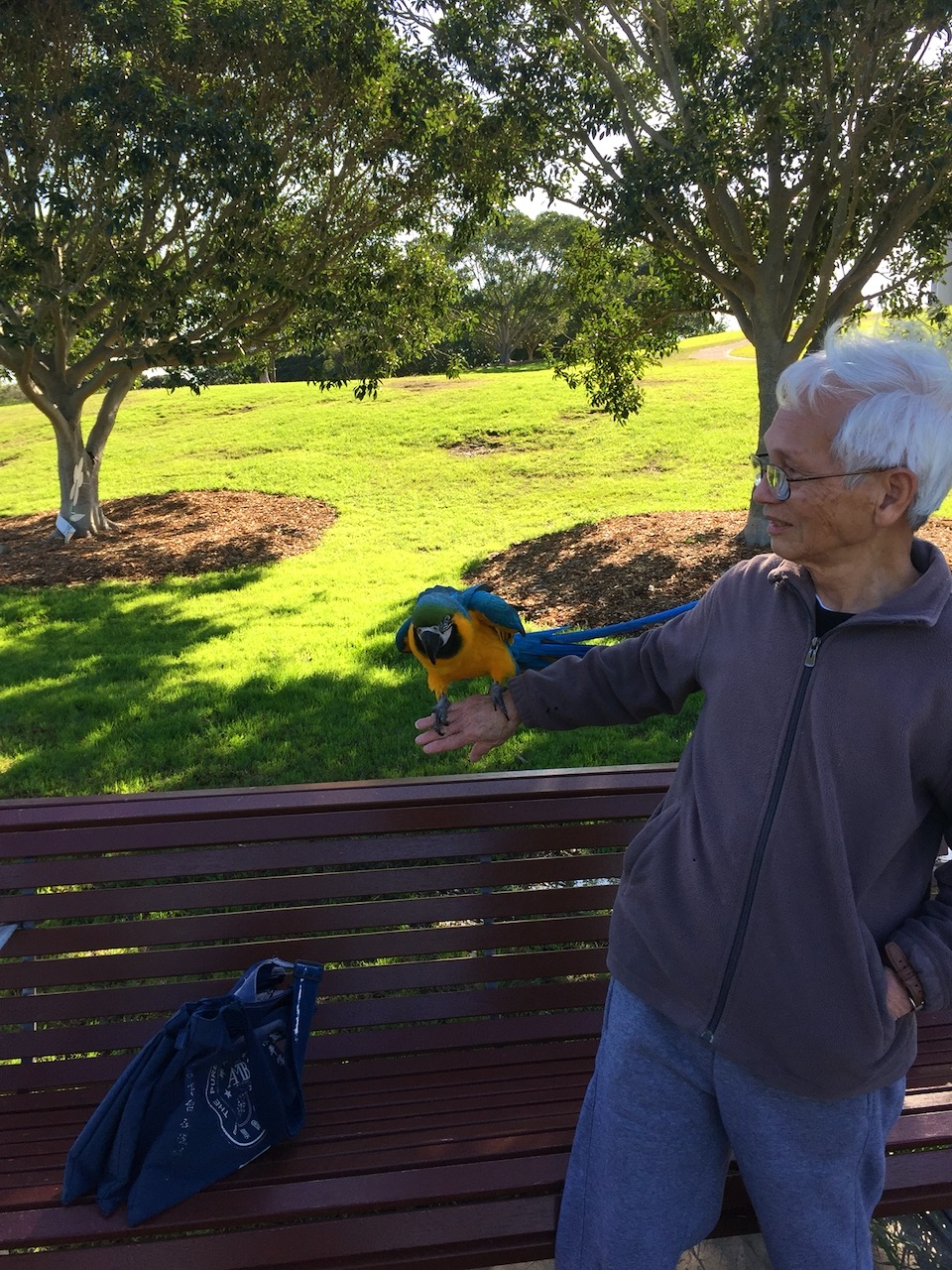 blue and gold macaw Sydney Park